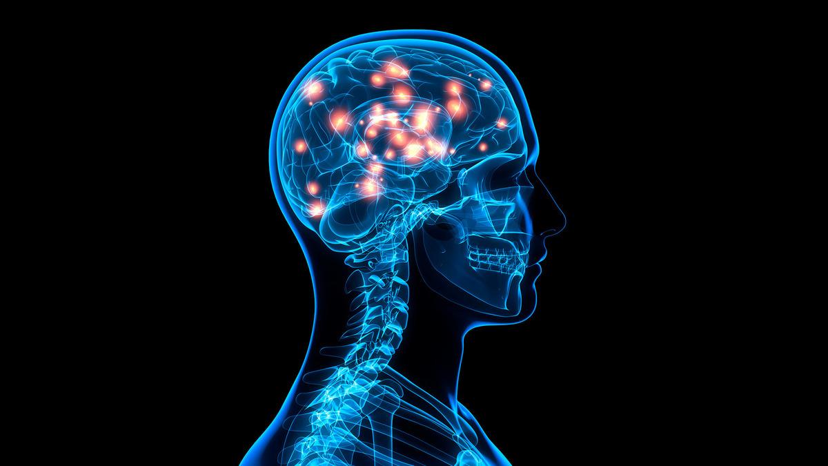 Human brain development adulthood