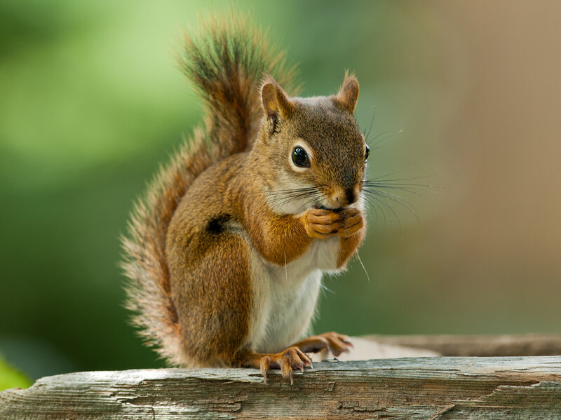 Considering Consciousness Through The Eyes Of A Squirrel : 13.7 ...