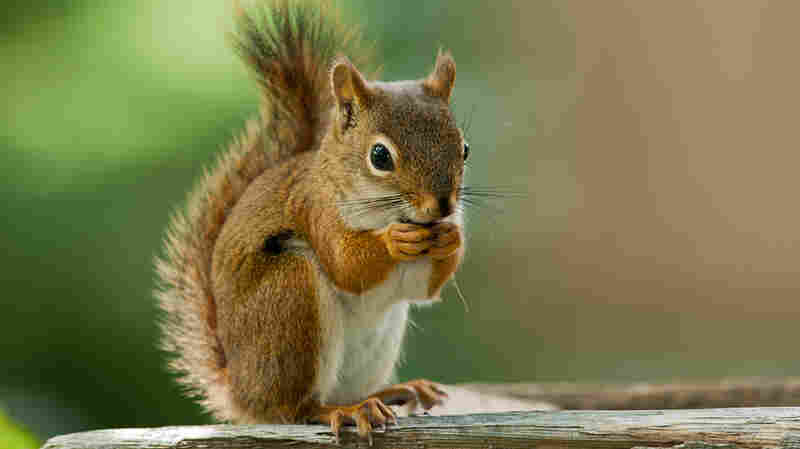 What's It Like To Be A Squirrel?