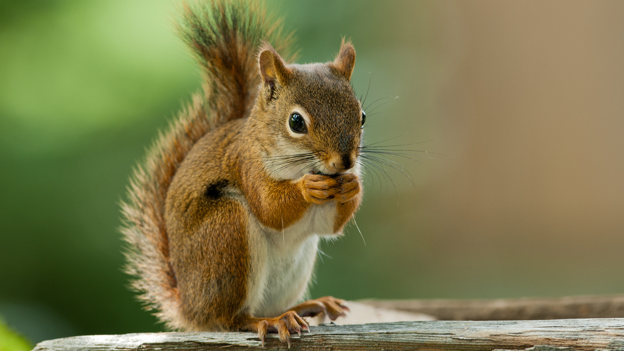Considering Consciousness Through The Eyes Of A Squirrel : 13.7: Cosmos And  Culture : NPR