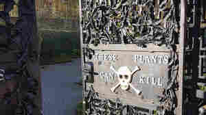 Welcome To The Poison Garden: Medicine's Medieval Roots