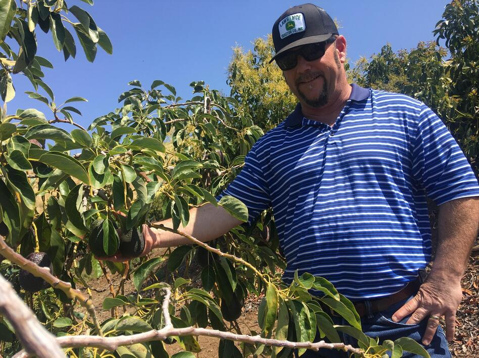 Jon Stearns says that as an avocado grower, he hopes new varieties come on the market.