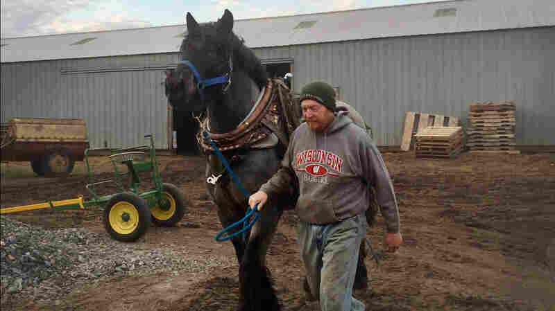 How Draft Horses Are Helping Upgrade Cell Towers In Wisconsin