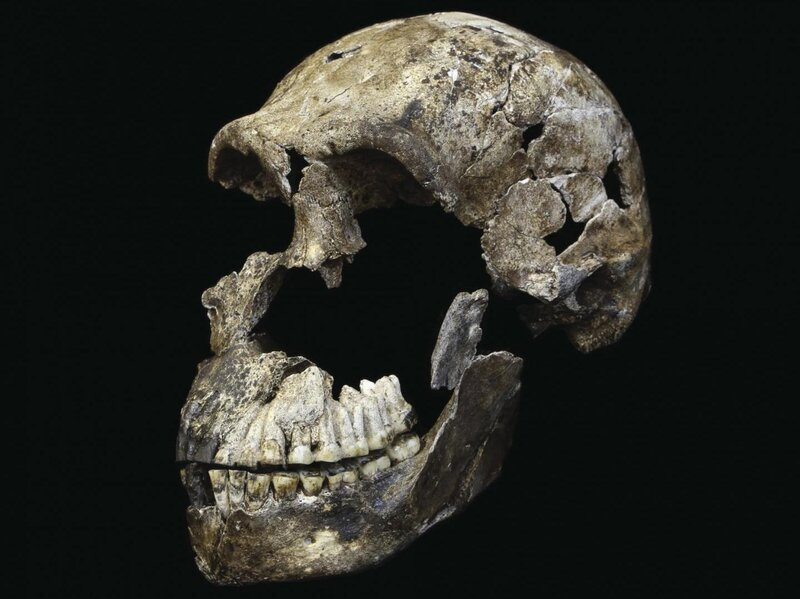 f7bbb542436 Primitive Humanlike Species Lived More Recently Than Expected   The ...
