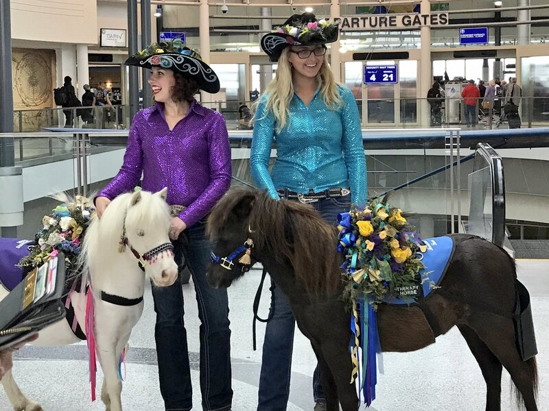Airport Travelers Find Stress Relief With Miniature Horse Therapy