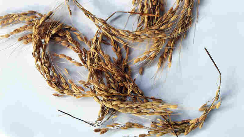 A Lost Rice Variety — And The Story Of The Freed 'Merikins' Who Kept It Alive