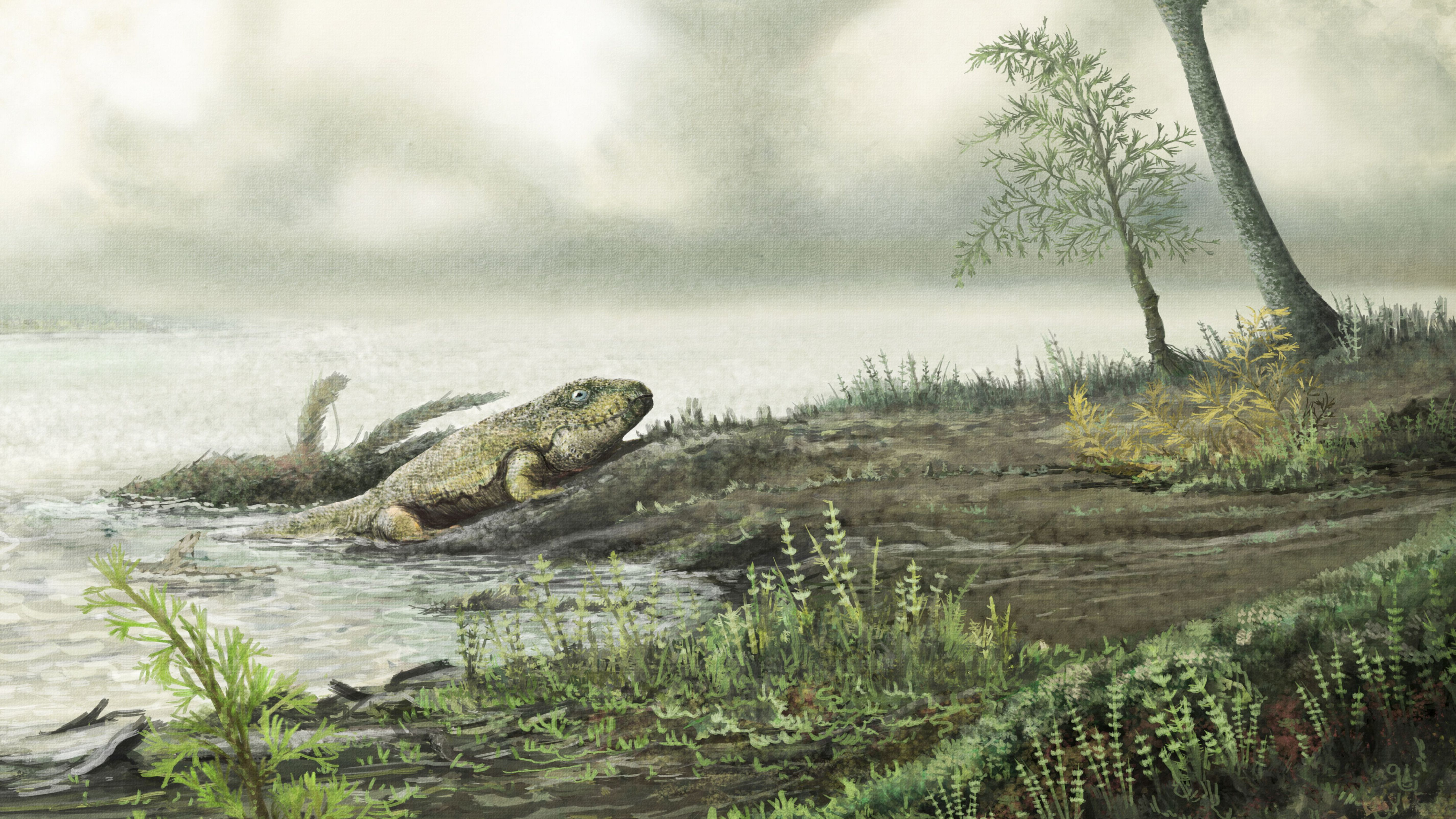 Drug-resistant 'superbugs' thrived long before dinosaurs roamed the Earth