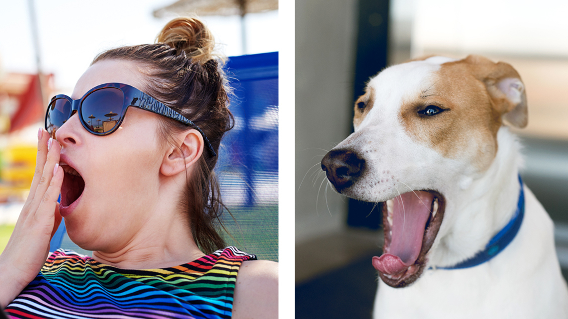 Yawning May Promote Social Bonding Even Between Dogs And Humans