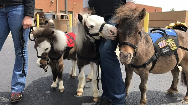 Therapy horses greet passengers as they arrive at Cincinnati/Northern Kentucky International Airport.