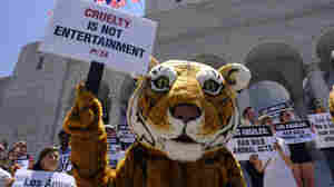 Ringling Bros. Curtain Call Is Latest Victory For Animal Welfare Activists