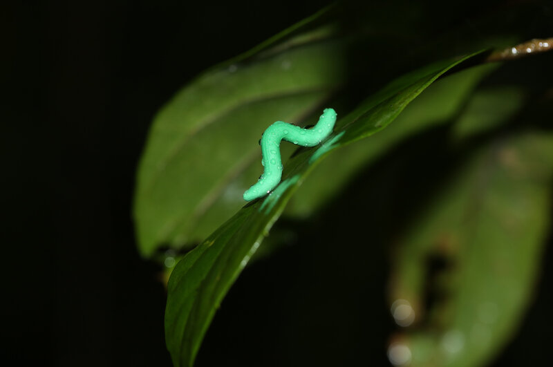 Scientists Glued Fake Caterpillars On Plants Worldwide Heres What
