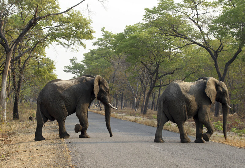 South African Man Crushed To Death By Wounded Elephant : The