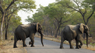 Elephants cross the road at Hwange National Park, Zimbabwe in 2015, not far from where an elephant crushed a man to death on Friday.