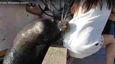 Girl Dragged Into Water By Sea Lion Treated For 'Seal Finger' Infection