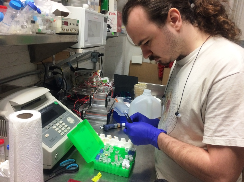 Will Shindel prepares for a gene-editing class using the CRISPR tool at a Brooklyn community lab called Genspace. (Alan Yu/WHYY)