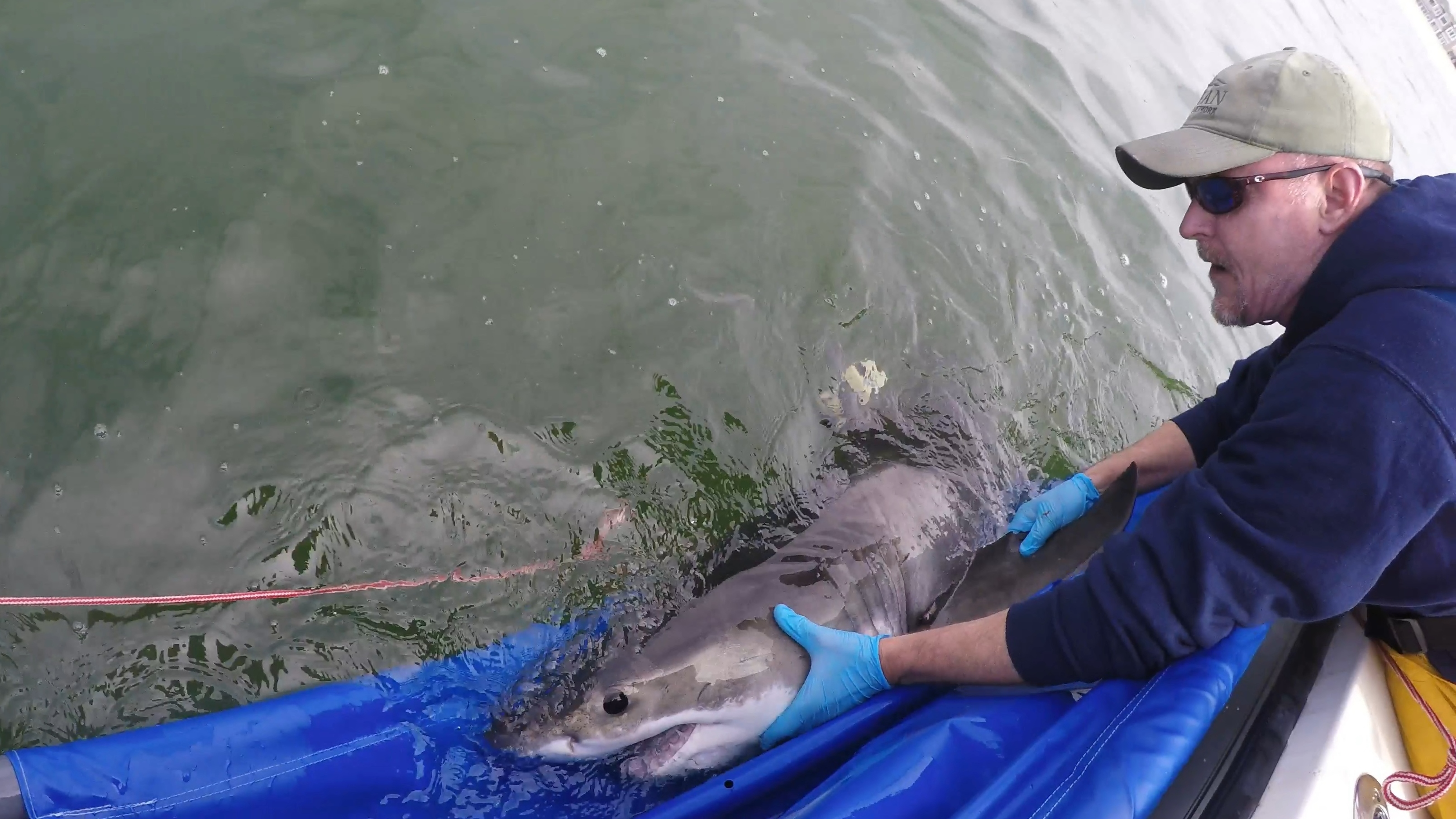 npr.org - Steve Inskeep - How An Interview With A Shark Researcher Wound Up Starring A Shark