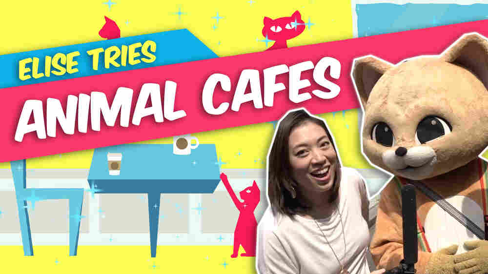 Video: Animal Cafes Are Cool, But Does A Raccoon Cafe Go Too Far?