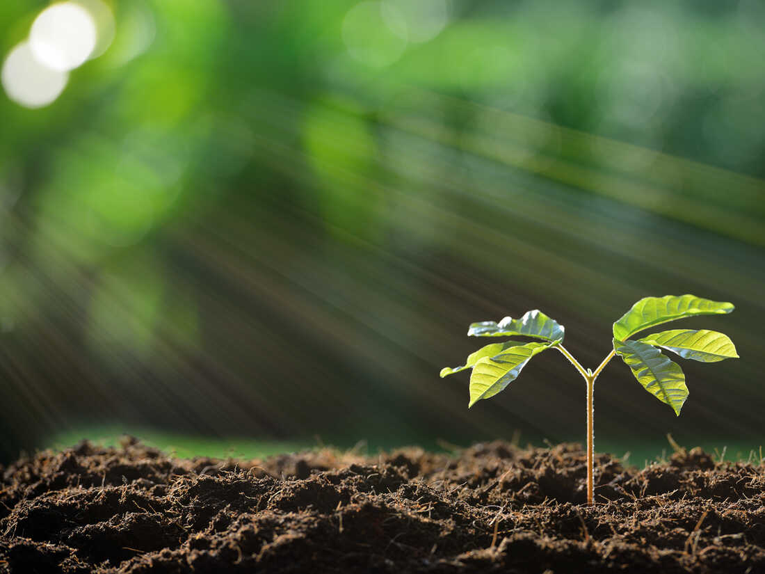 Photosynthesis shaped the history of our planet, says Adam Frank.