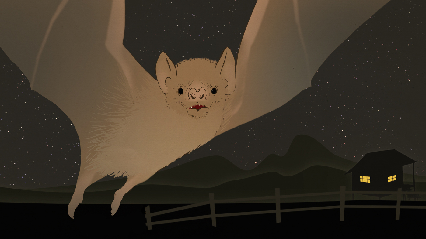 video get to know the bloodthirsty but cuddly vampire bat