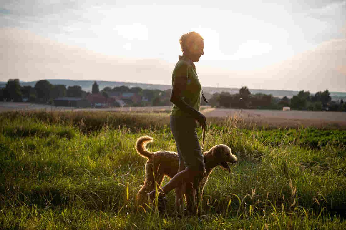 Ser dueño de Un Perro Conduce A Más Caminar Y hacer Ejercicio Para Mayores ... - NPR 1