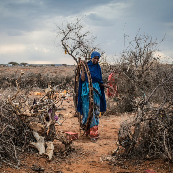 Photos Of Somalia: The Drought, The People, The Captured Porcupine