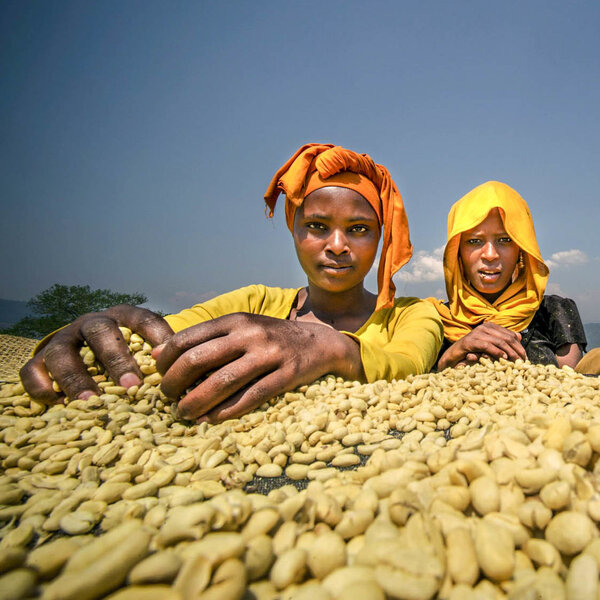 Ethiopia's Coffee Farmers Are 'On The Front Lines Of Climate Change'