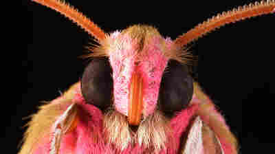 Moth Eyes Inspire Glare-Resistant Coating For Cellphone Screens