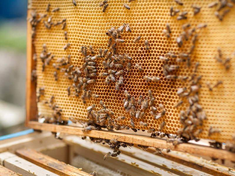 beekeepers feel the sting of california s giant beehive heist the
