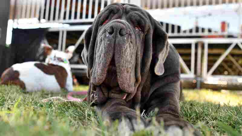 PHOTOS: Meet Martha, World's Ugliest Dog