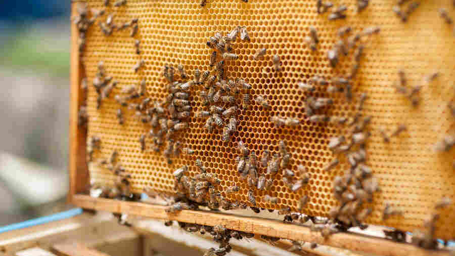Beekeepers Feel The Sting Of California's Great Hive Heist