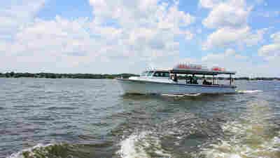 Chesapeake Bay Dead Zones Are Fading, But Proposed EPA Cuts Threaten Success
