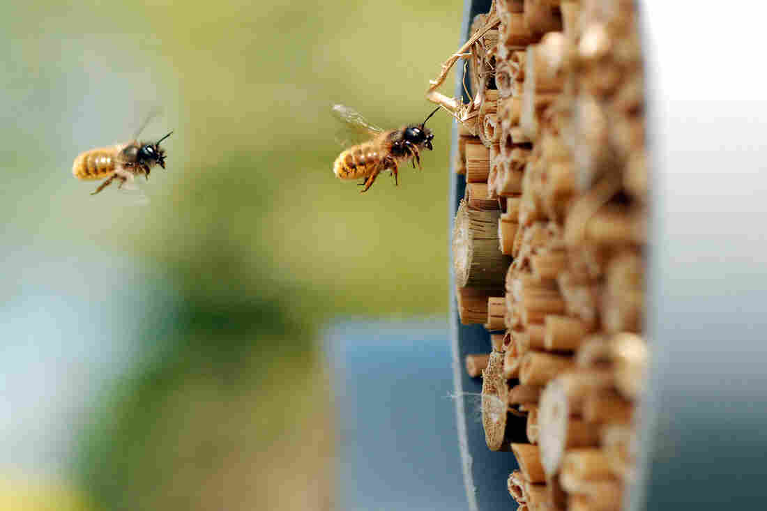 Largest-ever study of controversial pesticides finds harm to bees