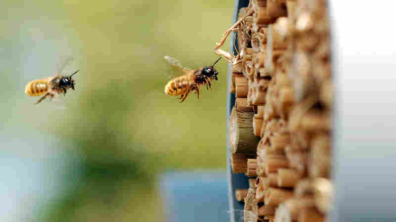 Pesticides Are Harming Bees — But Not Everywhere, Major New Study Shows