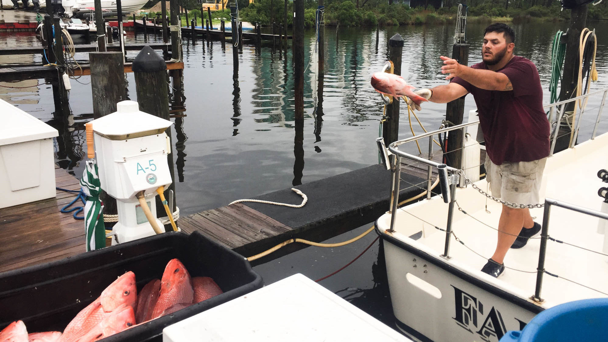 Deckhand Patrick Gallager tosses the day's catch to the dock from the Fairwater Two charter boat. (Debbie Elliott/NPR)