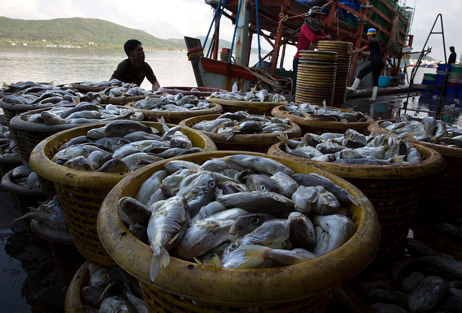 Fearing thailand 39 s new restrictions tens of thousands of for Docks fish menu
