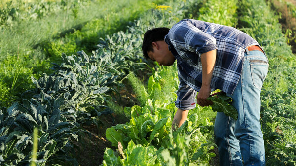 Nonprofit Helps California's Asian-American Farmers Grow Their Businesses