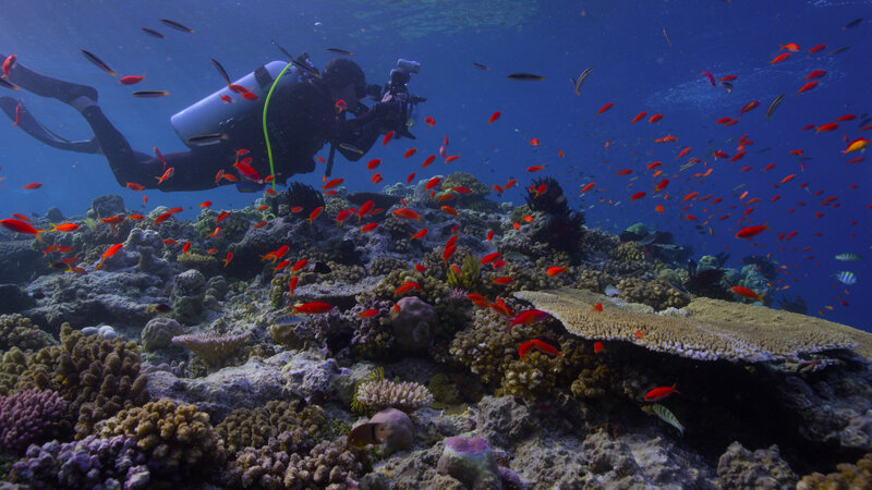 Chasing Coral': Documentary Vividly Chronicles A Growing Threat To