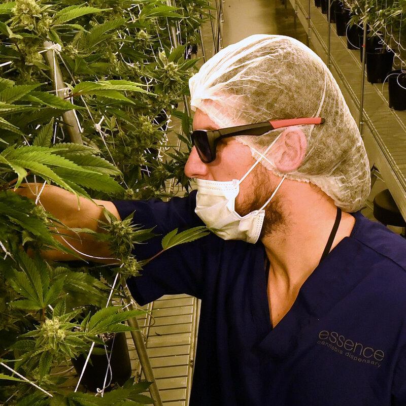 D C  Marijuana Market: Stuck In A Gray Zone : NPR