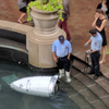 When Robot Face-Plants In Fountain, Onlookers Show Humanity — By Gloating