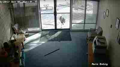 WATCH: Security Camera Footage Reveals Rogue Goat At Colorado Office