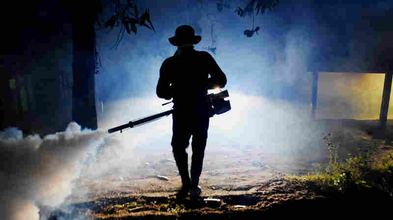 Dengue Fever Cases Top 100,000 In Sri Lanka's Outbreak