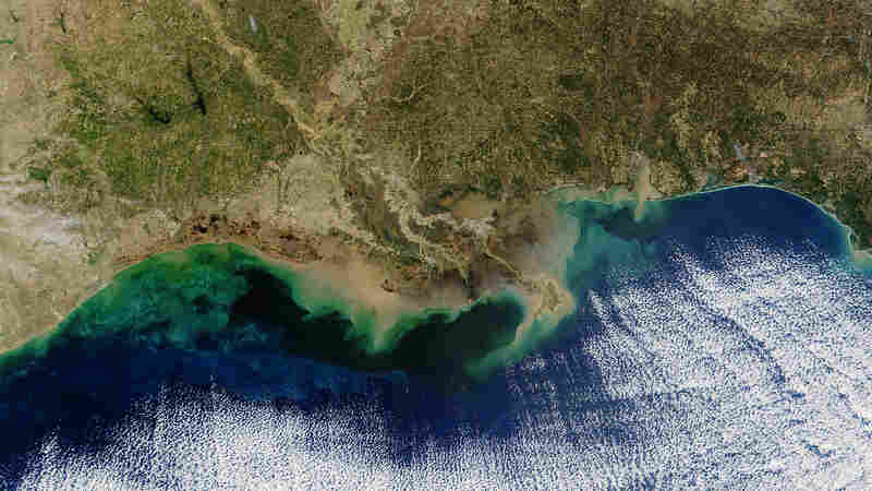 The Gulf Of Mexico's Dead Zone Is The Biggest Ever Seen
