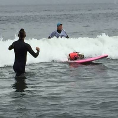 Image for Hang 20: Abbie Girl Takes Top Pooch In World Dog Surfing Championship