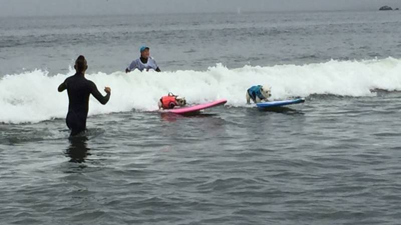 Hang 20: Abbie Girl Takes Top Pooch In World Dog Surfing Championship