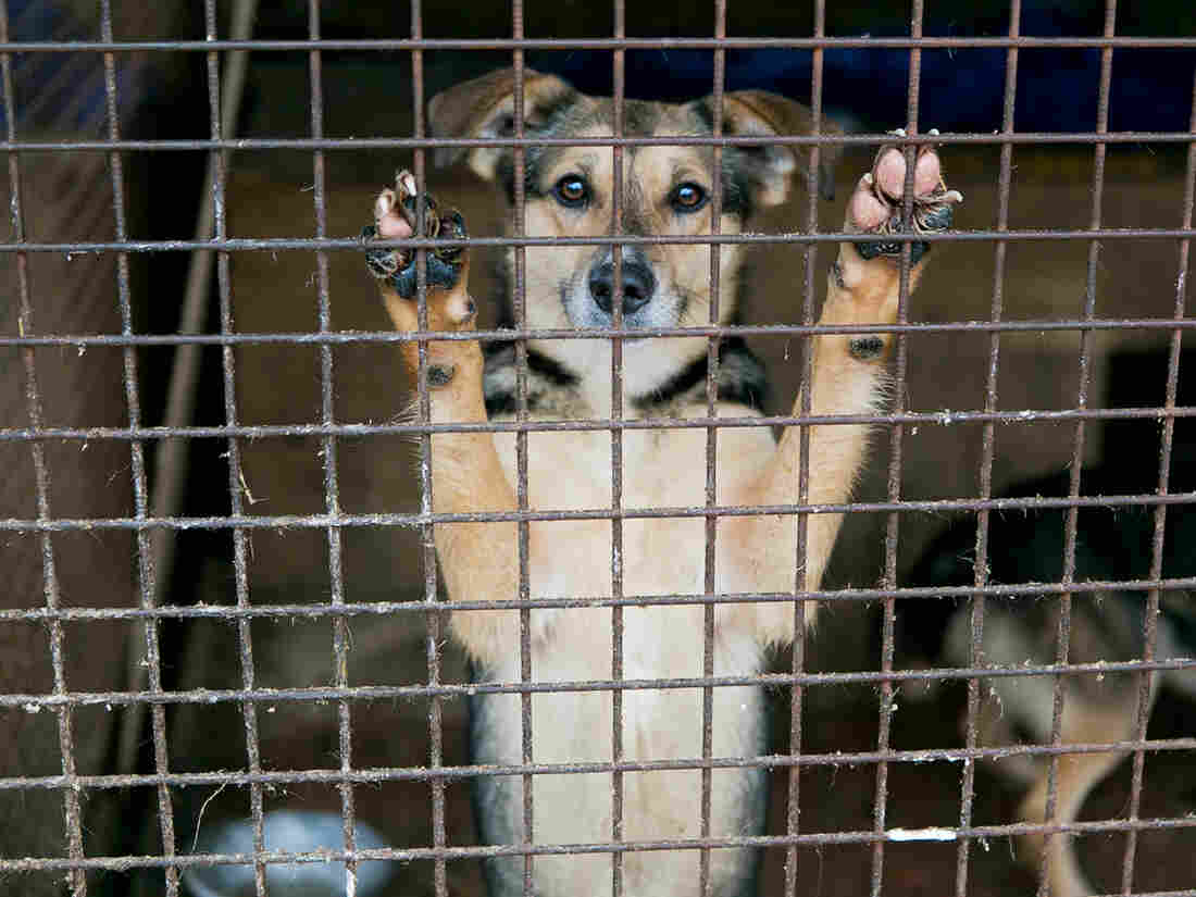 It takes more than temperament tests to ensure safe dog adoptions, says Alva Noë.