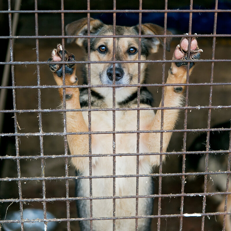 California Bans Pet Stores From Selling Commercially-Bred