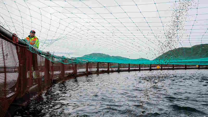 Can We Feed The World With Farmed Fish?