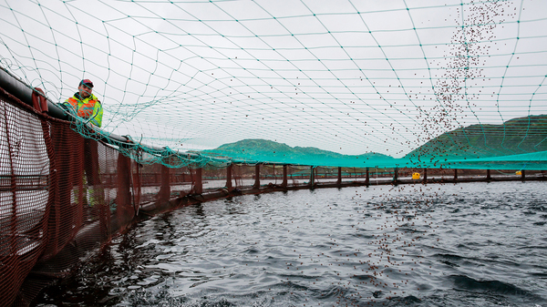A Russian fish farming operation in Ura Bay in the Barents Sea.