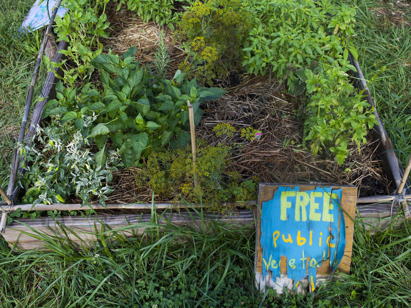 How My Little Community Garden Plot Went From Flop To Flourish : The ...