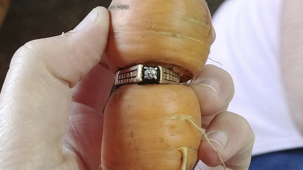 """Mary Grams, 84, holds a carrot that grew through her engagement ring in Alberta, Canada. Grams, who lost her diamond ring 13 years ago while pulling weeds in her garden, i ...</td></tr><tr><td><a target=_blank href=""""http://www.npr.org/sections/thetwo-way/2017/08/17/544157632/despite-rift-saudi-arabia-says-it-will-allow-qatari-pilgrims-to-attend-hajj?utm_medium=RSS&utm_campaign=news"""" class=""""newslink""""><b>Despite Rift, Saudi Arabia Says It Will Allow Qatari Pilgrims To Conduct Hajj</b></a><small><font color=""""#606060""""> - NPR News - Top Stories</font></small><br><img src="""